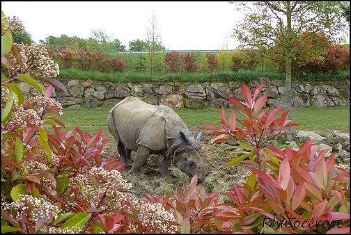 Zoo Parc de Beauval 17_rhi10