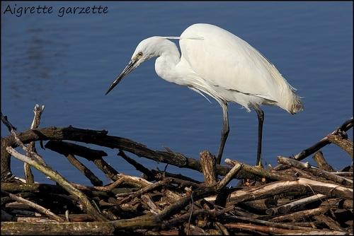 Réserve Ornithologique du Teich Aigret11