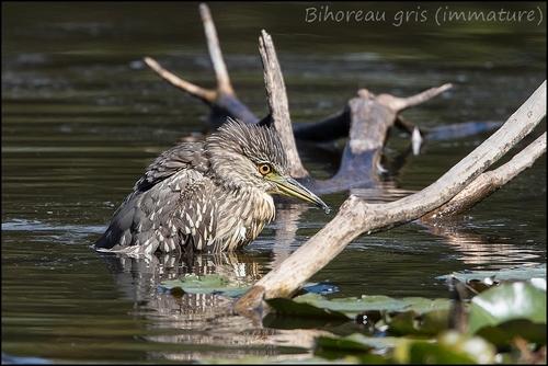 Réserve Ornithologique du Teich Bihore12