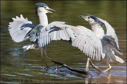 Réserve Ornithologique du Teich Bihore13