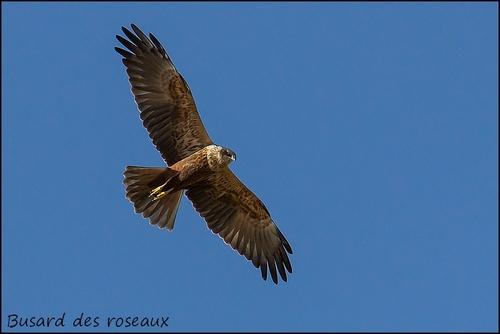 Réserve Ornithologique du Teich Busard11