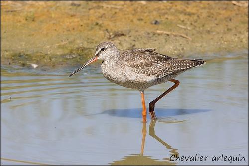 Réserve Ornithologique du Teich Cheval11