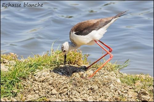 Réserve Ornithologique du Teich Echass11