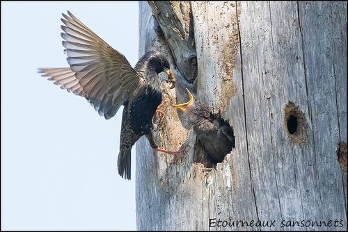 Réserve Ornithologique du Teich Etourn11