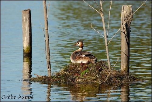Réserve Ornithologique du Teich Grybe_11