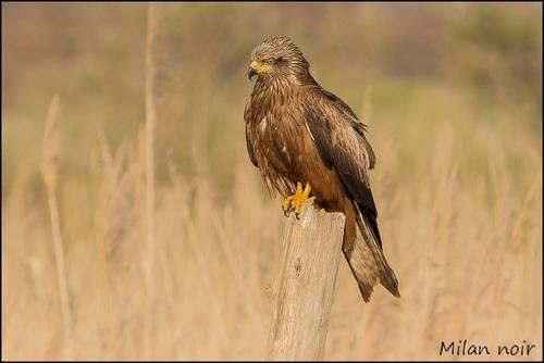 Réserve Ornithologique du Teich Milan_11