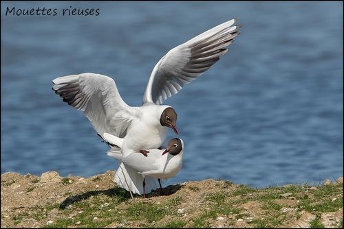 Réserve Ornithologique du Teich Mouett11