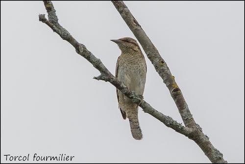 Réserve Ornithologique du Teich Torcol12
