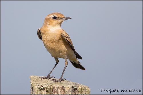 Réserve Ornithologique du Teich Traque11