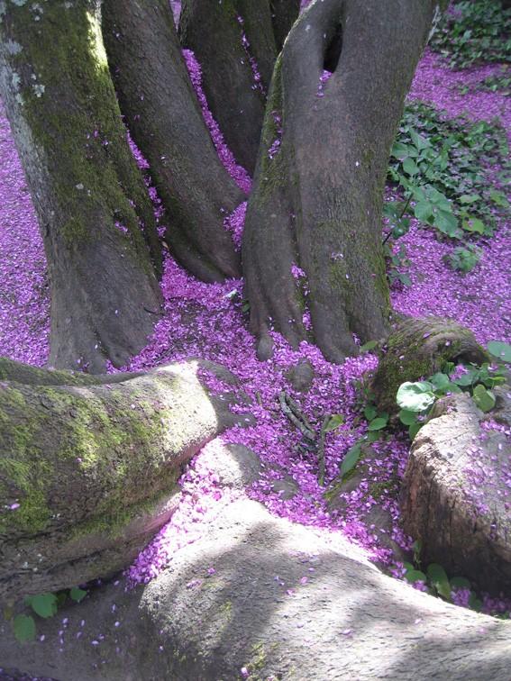 floraisons des arbres et des arbustes - Page 4 Arbre_11