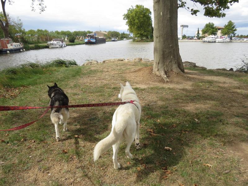 Chadka et Yocco en vacances dans le Sud 30_cha10