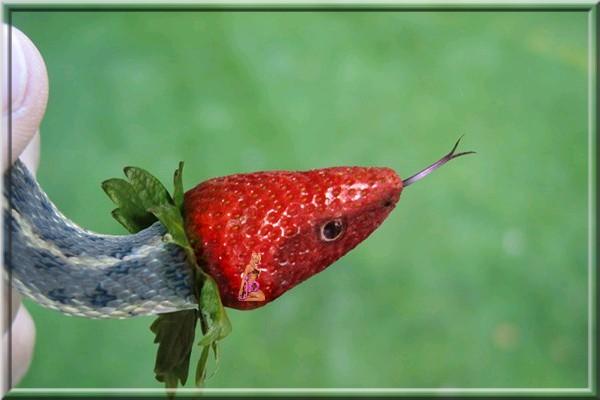 Images fruits et légumes en délires  - Page 2 12652010