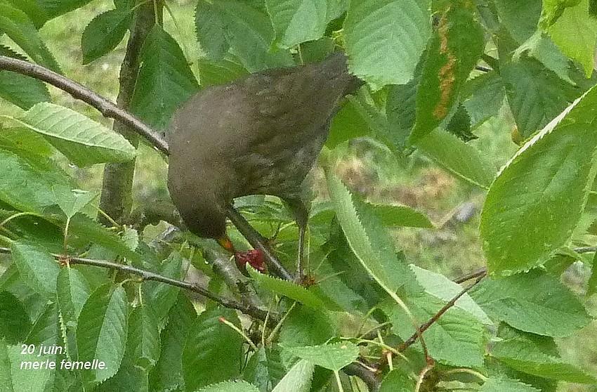 2011: La bio-diversité dans mon jardin.... oiseaux, mouotns, nénuphars. - Page 3 00815