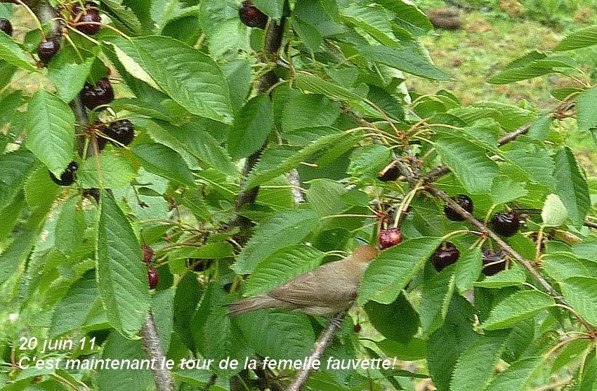 2011: La bio-diversité dans mon jardin.... oiseaux, mouotns, nénuphars. - Page 3 01214