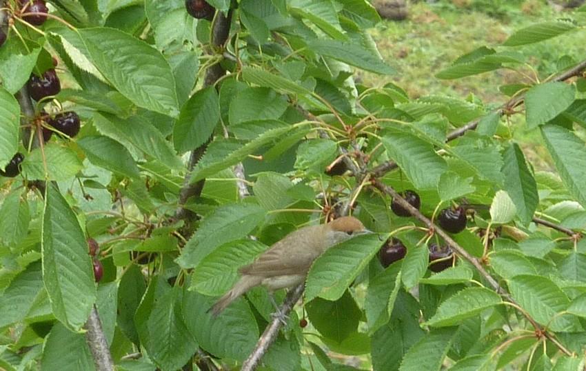 2011: La bio-diversité dans mon jardin.... oiseaux, mouotns, nénuphars. - Page 3 01316