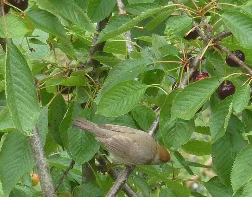 2011: La bio-diversité dans mon jardin.... oiseaux, mouotns, nénuphars. - Page 3 01710