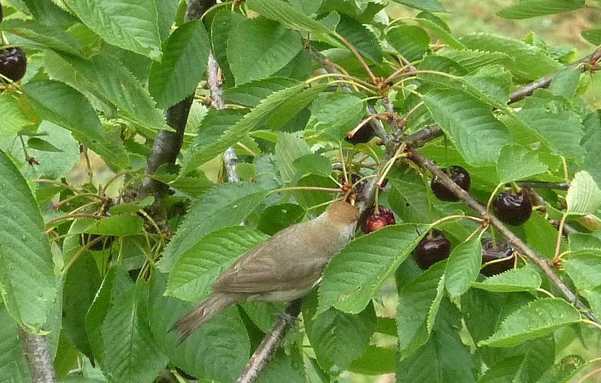 2011: La bio-diversité dans mon jardin.... oiseaux, mouotns, nénuphars. - Page 3 01812