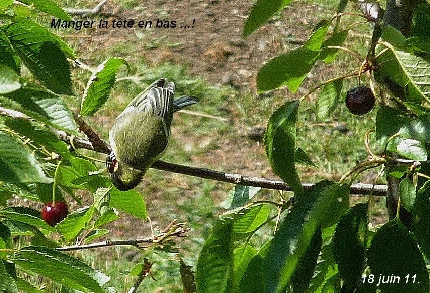 2011: La bio-diversité dans mon jardin.... oiseaux, mouotns, nénuphars. - Page 3 01912
