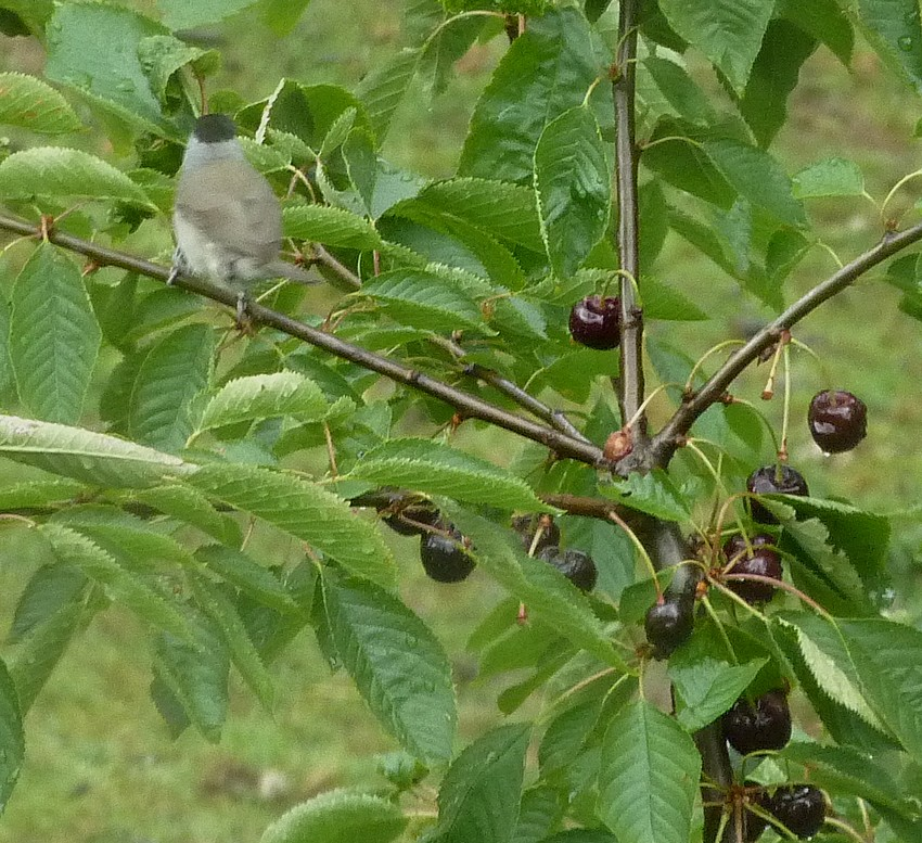 2011: La bio-diversité dans mon jardin.... oiseaux, mouotns, nénuphars. - Page 3 02311