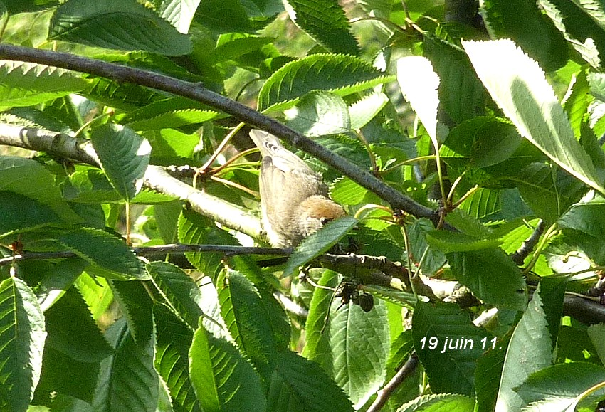 2011: La bio-diversité dans mon jardin.... oiseaux, mouotns, nénuphars. - Page 3 02810