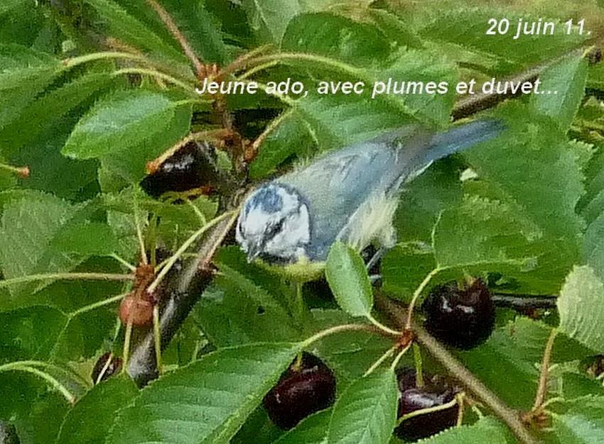 2011: La bio-diversité dans mon jardin.... oiseaux, mouotns, nénuphars. - Page 3 03511