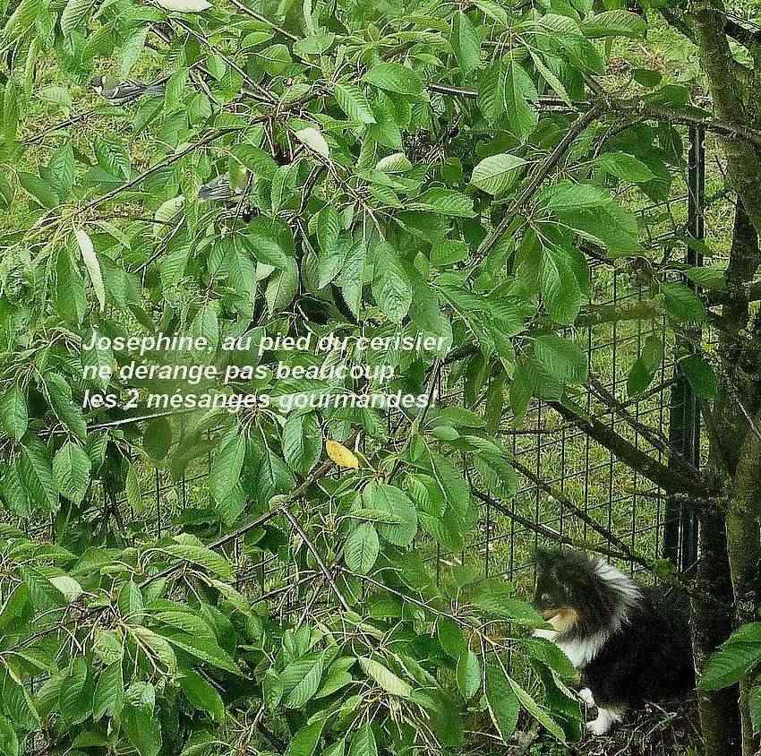 2011: La bio-diversité dans mon jardin.... oiseaux, mouotns, nénuphars. - Page 3 04111