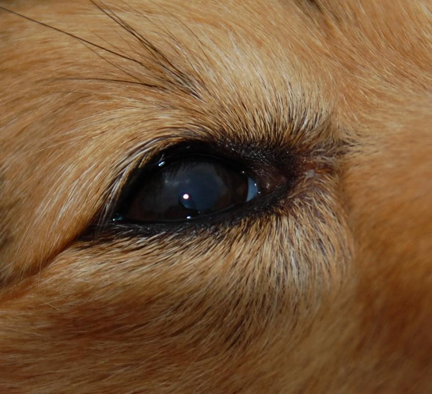 dépot de graisse sur l'oeil Dsc_0113