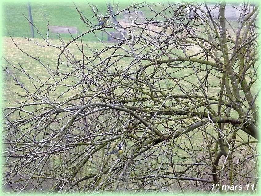 2010: dans mon jardin! oiseaux moutons poissons - Page 2 Mars_010
