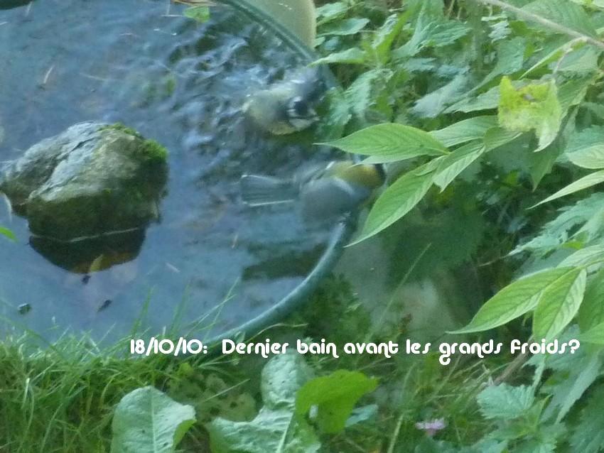 2010: dans mon jardin! oiseaux moutons poissons - Page 4 Pade_015