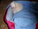 knacky, furette albinos - adoptée par Mélanie - Page 2 Cimg0311