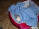 knacky, furette albinos - adoptée par Mélanie - Page 2 Cimg0312