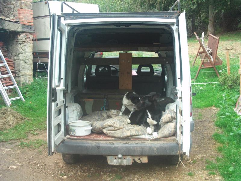 BURT (cane corso) File0620