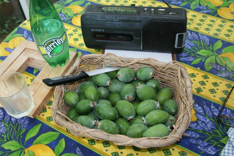 Acca sellowiana (Feijoa) - goyavier du Brésil Acca_s12