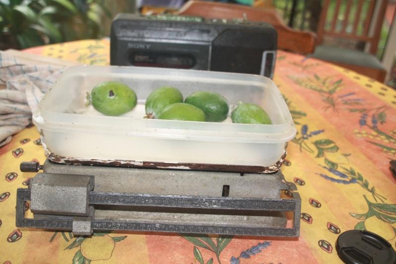 Acca sellowiana (Feijoa) - goyavier du Brésil Acca_s13