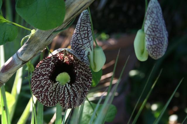 Toujours ambiance et fleurs d'été Aristo10