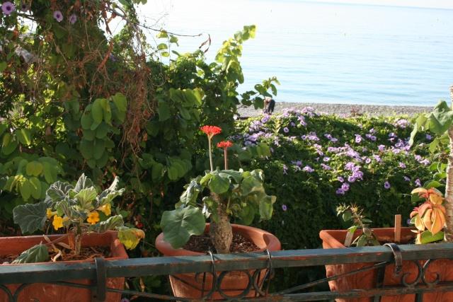 Balcon fleuri Balcon11
