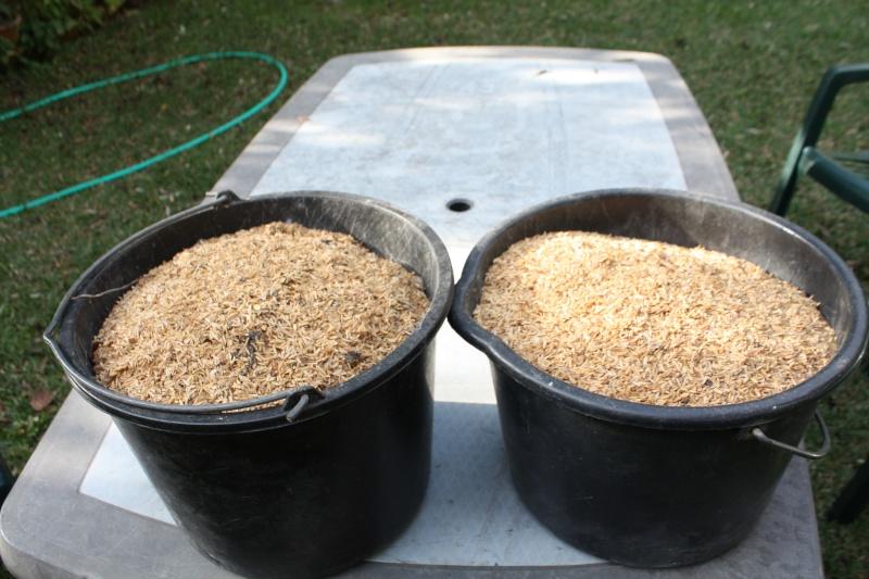 substrat à base de cosse de riz Coaase10
