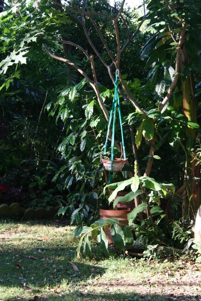 Toujours ambiance et fleurs d'été Coffea10