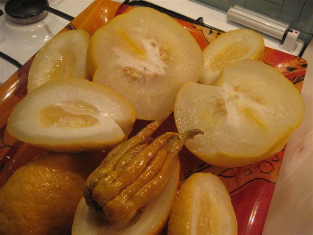 Citrus medica - main de Bouddha Cydrat10