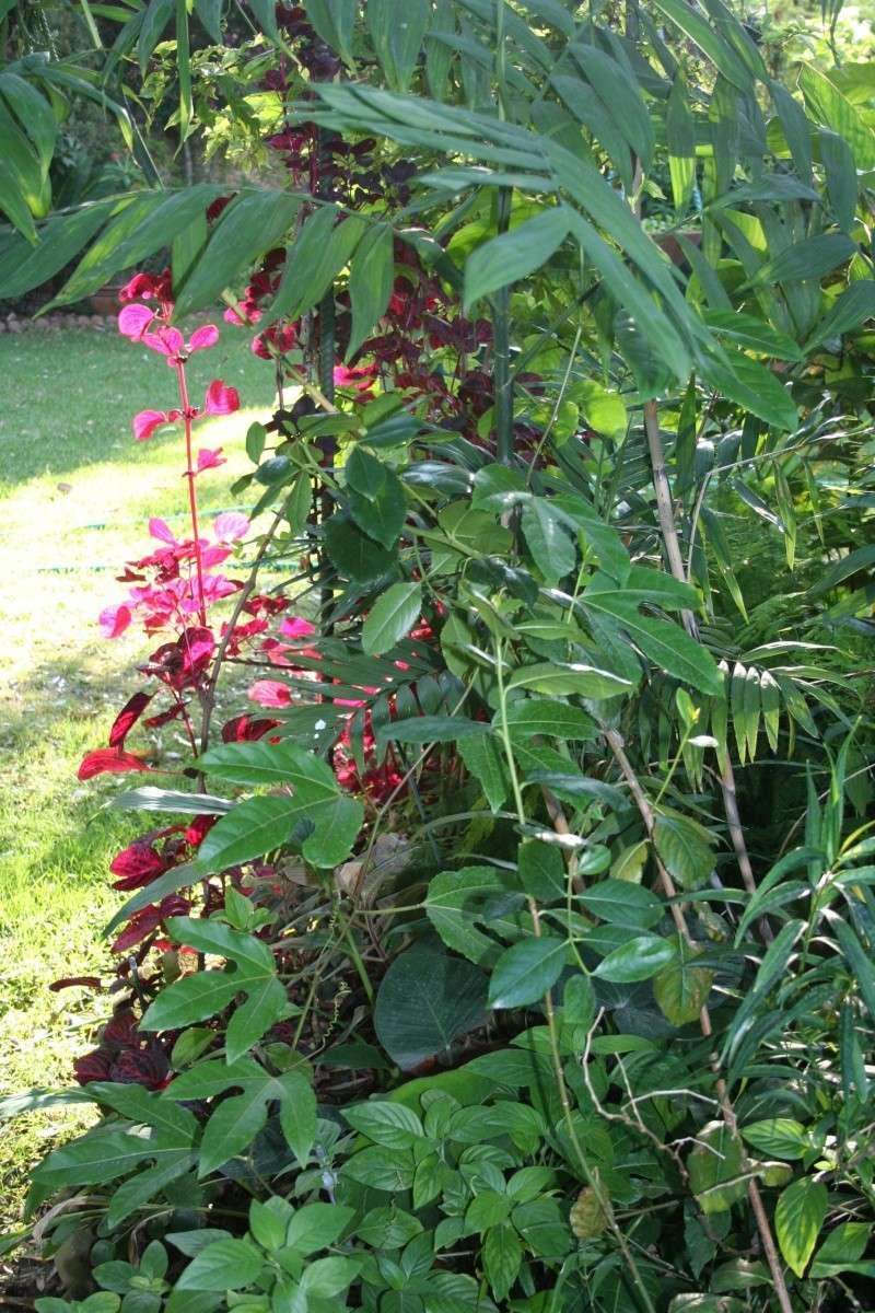 Toujours ambiance et fleurs d'été Plate_13