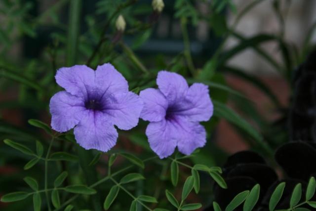 Toujours ambiance et fleurs d'été Ruelli10