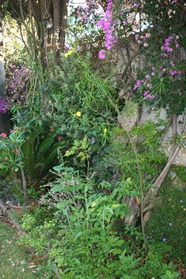 Toujours ambiance et fleurs d'été Thevet11