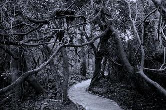 Forêt 264410