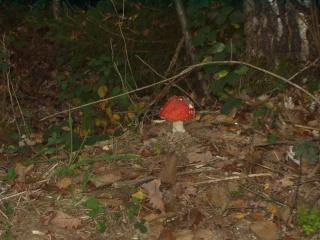 Forêt Pa070012