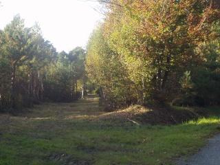 Forêt Pa070013