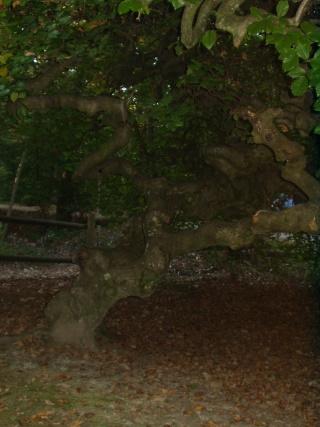 Forêt Pa070015