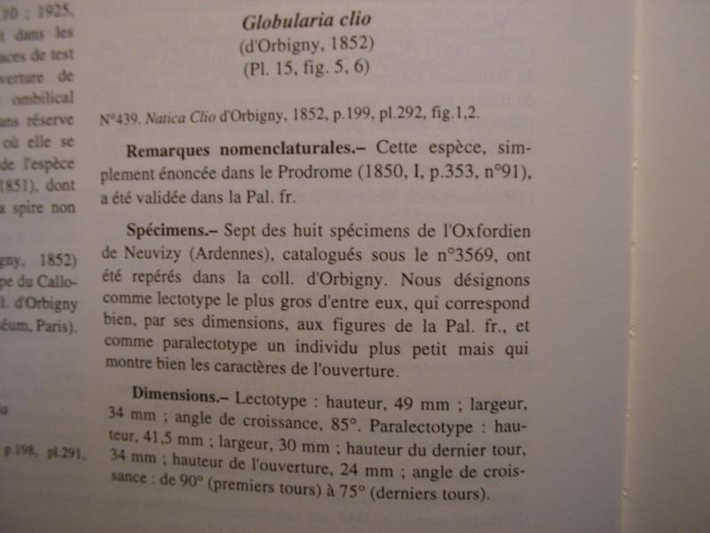 [résolu]Vieil Saint Rémy, Globularia clio (d'ORBIGNY, 1852) Repons10