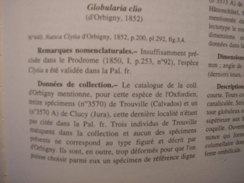 [résolu]Vieil Saint Rémy, Globularia clio (d'ORBIGNY, 1852) Repons11