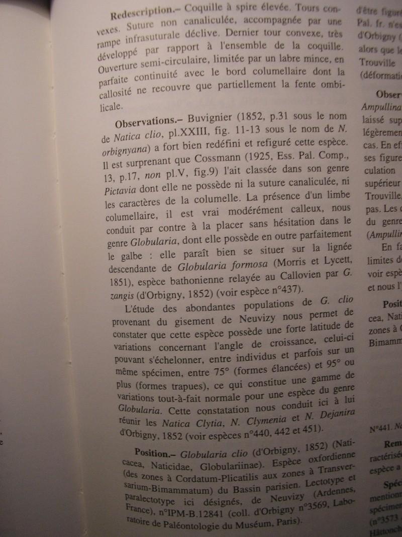 [résolu]Vieil Saint Rémy, Globularia clio (d'ORBIGNY, 1852) Rotati10