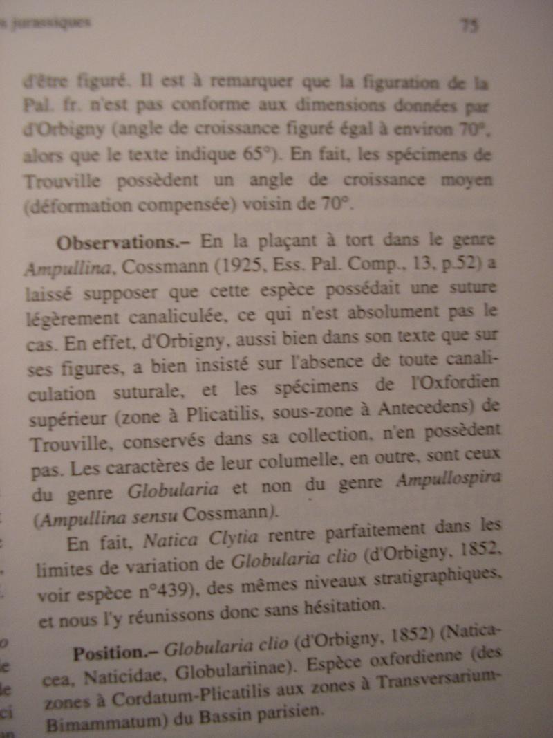 [résolu]Vieil Saint Rémy, Globularia clio (d'ORBIGNY, 1852) Rotati11
